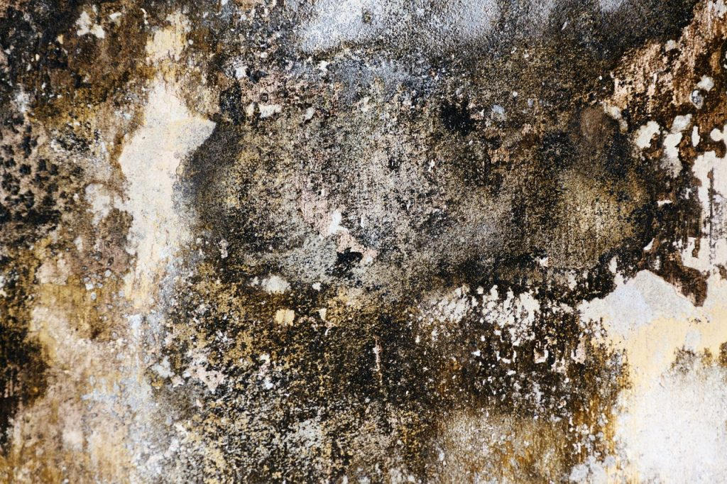 black mold dirty